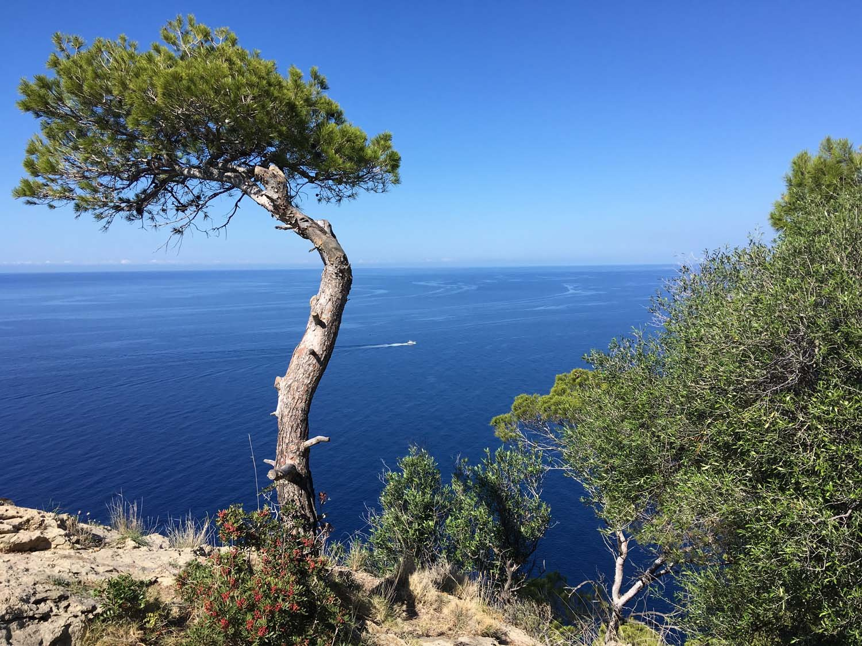 2019HD35 Mallorca Bike Week 56