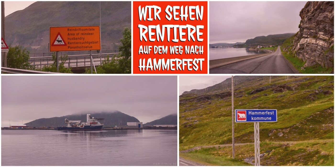 Ein Eisbär auf dem Schild von Hammerfest