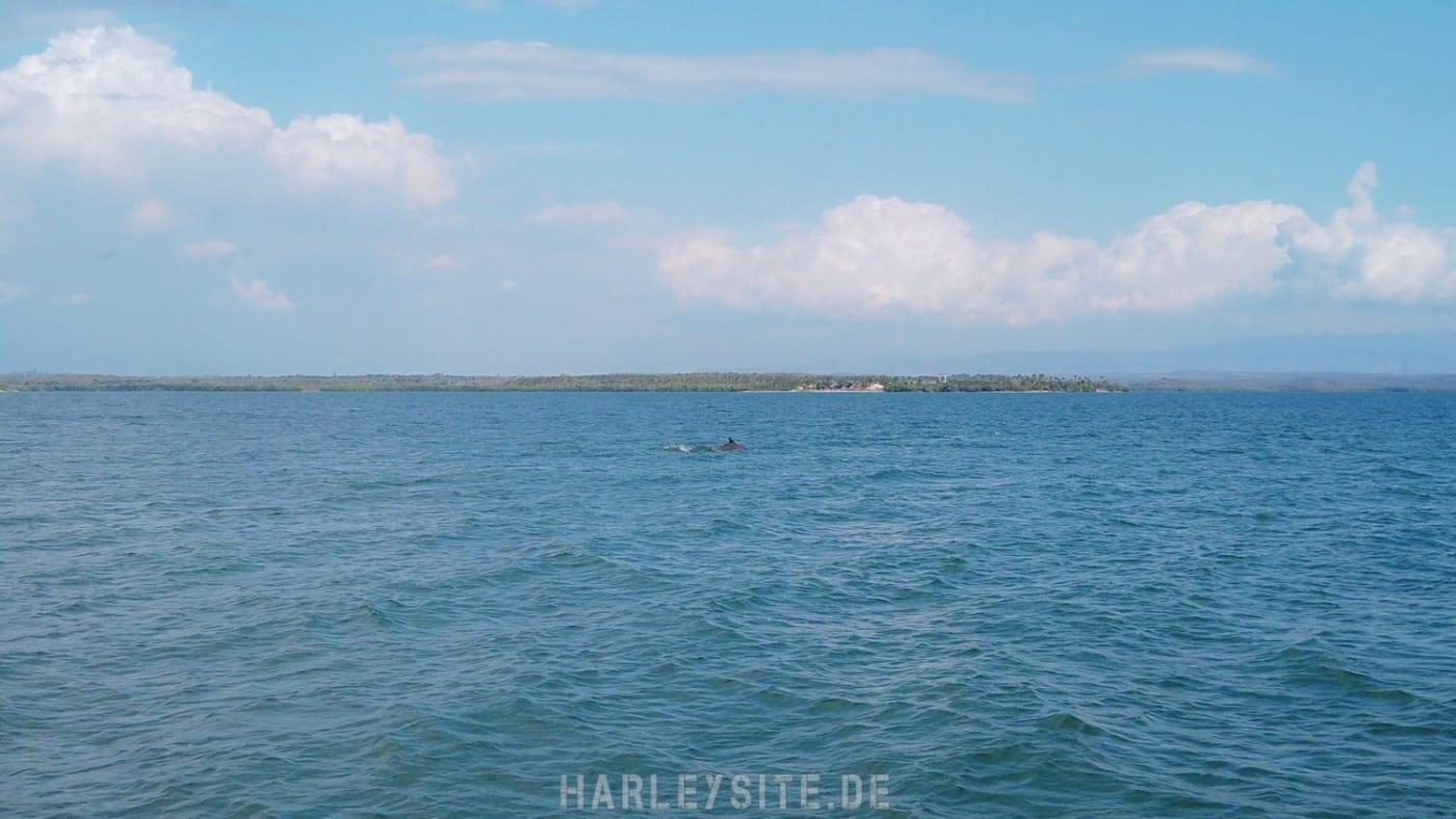 Delphine die bei uns am Steg vorbei geschwommen sind.